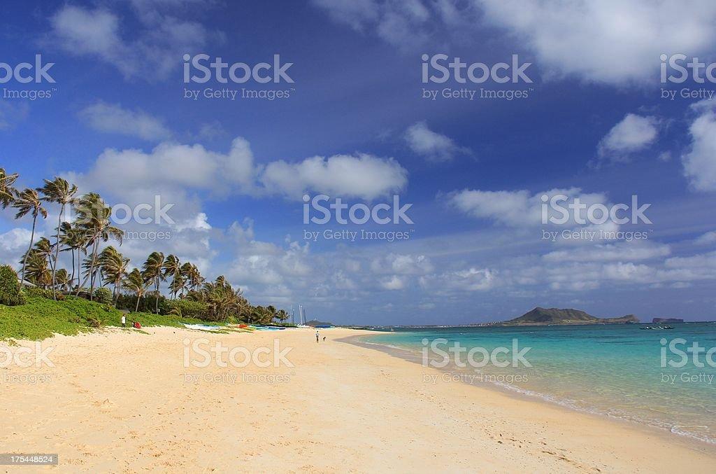 Lanikai beach Pacific ocean palm tree scenic on Oahu Hawaii stock photo