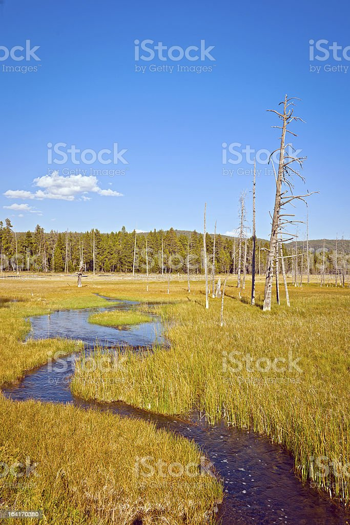 Lanscape in Yellowstone Wyoming USA royalty-free stock photo