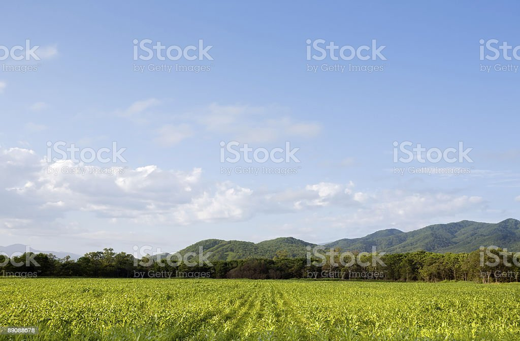 lanscape royalty-free stock photo