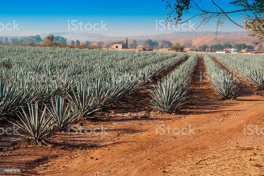 Lanscape tequila guadalajara stock photo