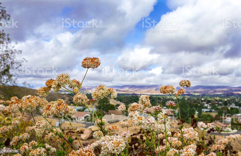 Lanscape view on a cloudy day with white wildflowers stock photo
