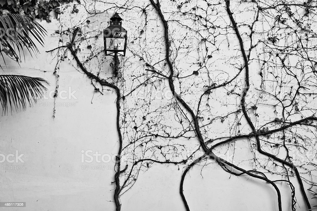 Lantern and dormant creeper on a wall stock photo