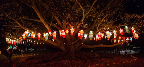 lantern festival at the auckland domain, new zealand - festival delle lanterne cinesi foto e immagini stock