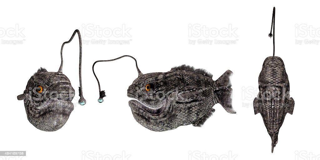 lantern fish stock photo