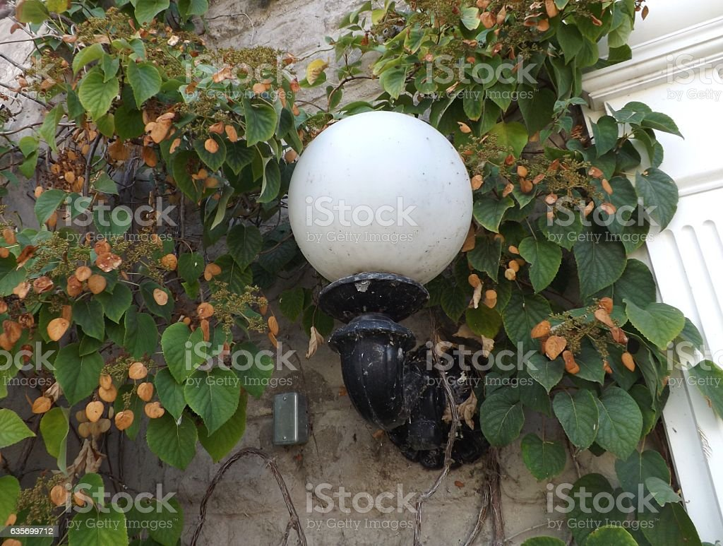Lantern in the Vines royalty-free stock photo
