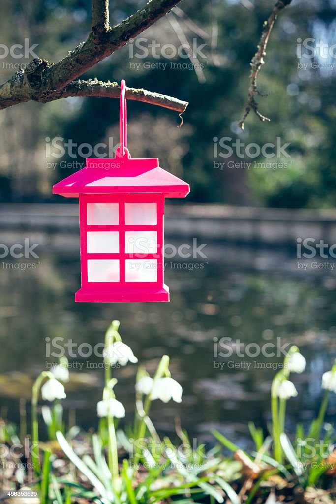 Lantern with snowdrops royalty-free stock photo