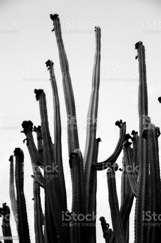 Lanzarote-Kaktusgarten – Foto