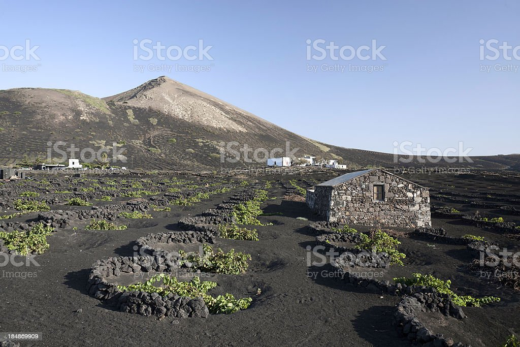 Lanzarote Wines Area stock photo