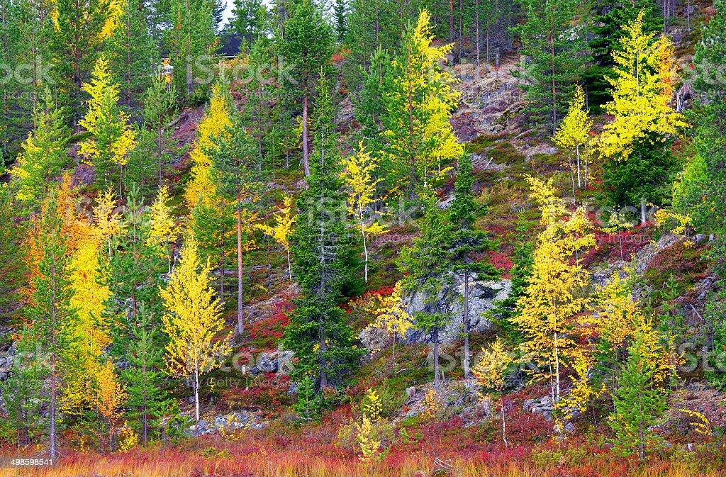 Lapland in autumn royalty-free stock photo