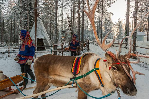 """Lapponia (Finlandia).   Due Sami persone e renne vicino a un lavvu"""""""