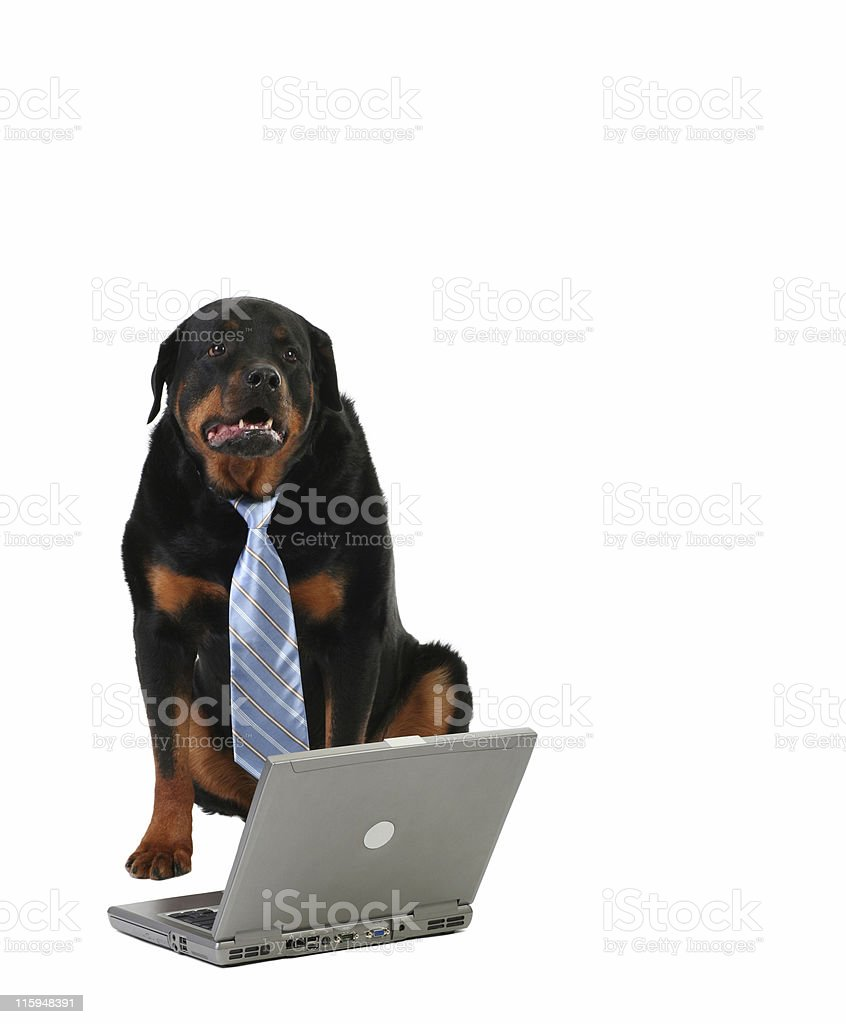 laptop and dog royalty-free stock photo