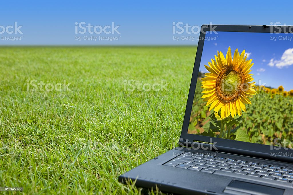 laptop and grass (new) royalty-free stock photo