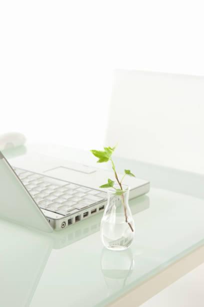 laptop und zierpflanzen - zwetschgenmus stock-fotos und bilder
