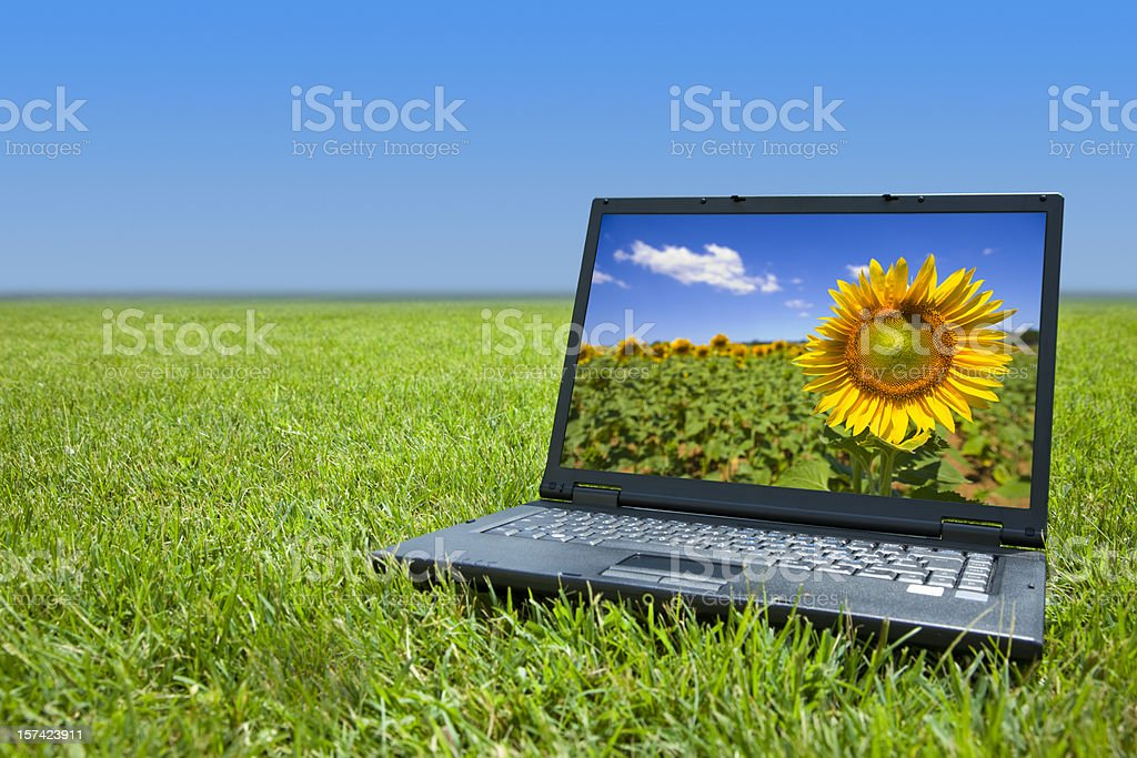 Laptop with sunflower background sitting in field of grass stock photo