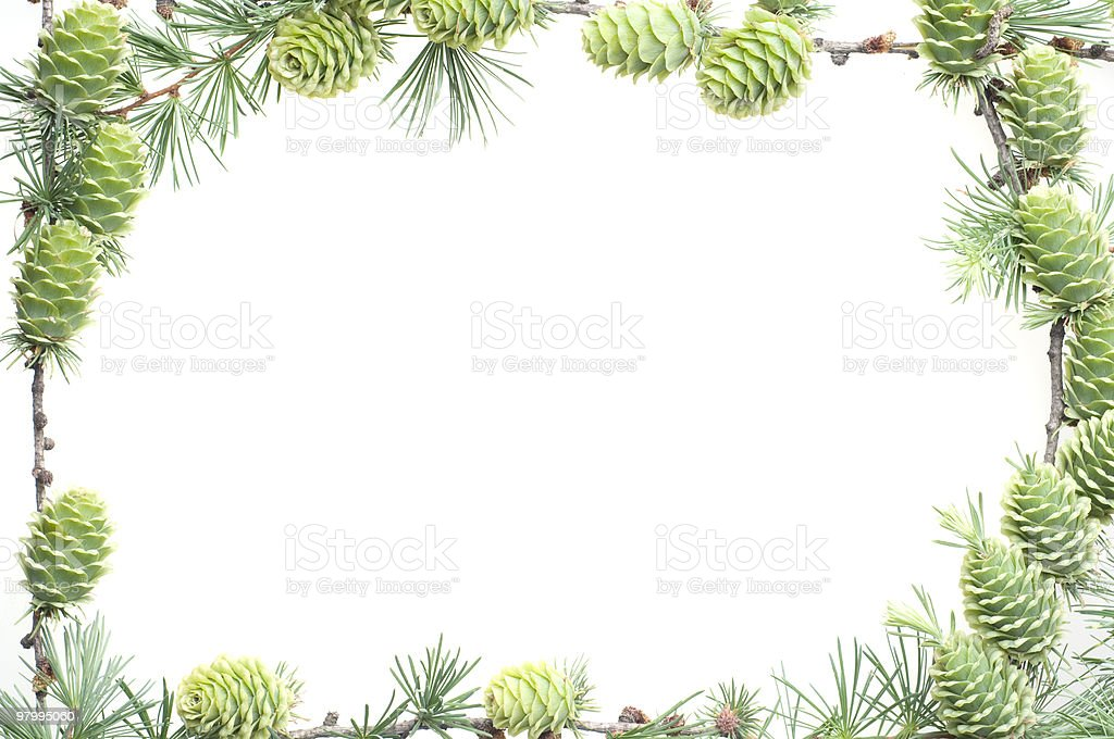 Larch cone frame royalty-free stock photo