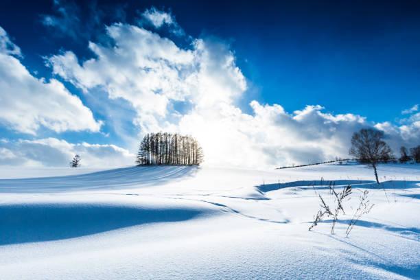 雪の丘のカラマツの森と美瑛の青空 - 北海道 ストックフォトと画像