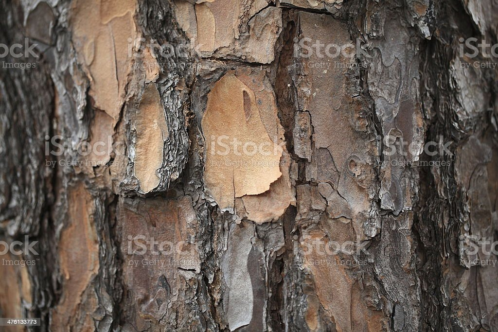 Larch skin stock photo