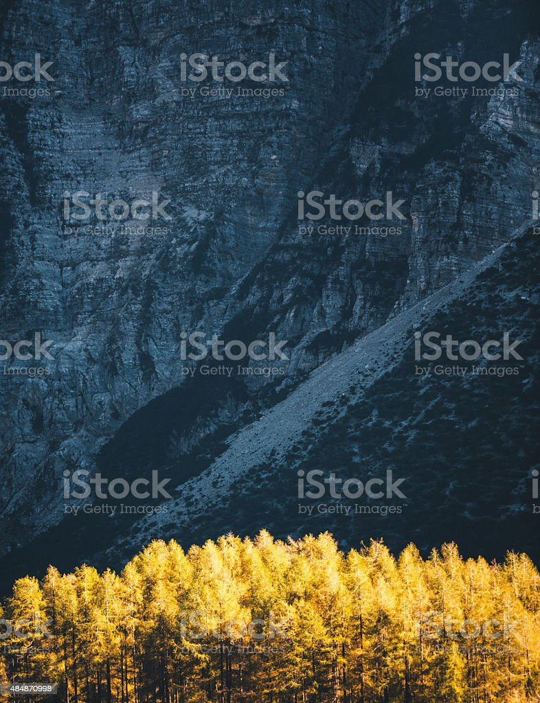 Larch Trees In The Mountains stock photo