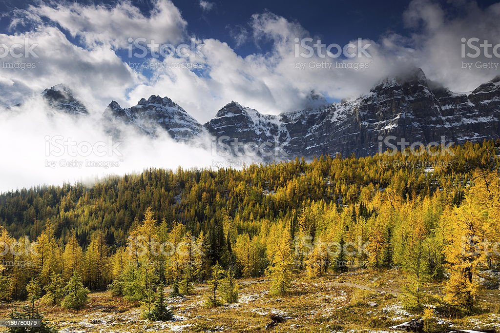 Alerce Valley - foto de stock