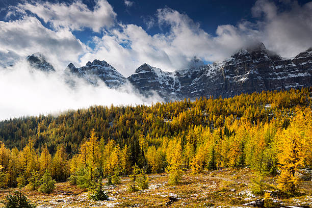 Larch Valley A valley full of yellow larches in autumn.  Banff National Park, Alberta. valley of the ten peaks stock pictures, royalty-free photos & images