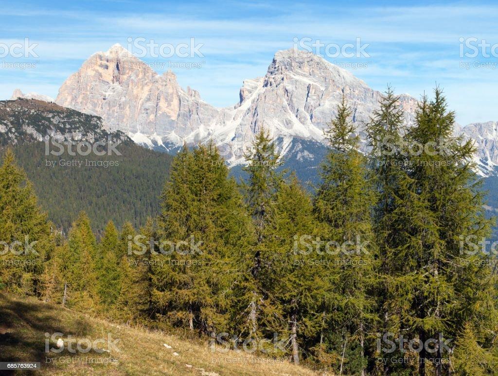 Larch wood and Le Tofane Gruppe, Dolomiti, Italy zbiór zdjęć royalty-free