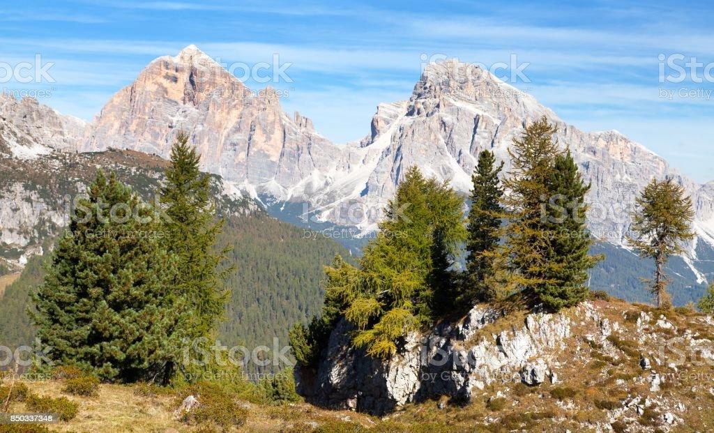 Larch wood and Le Tofane Gruppe, Dolomiti, Italy stock photo