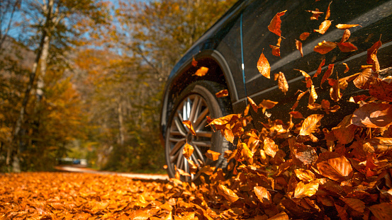 LOW ANGLE: Large 4x4 vehicle drives along a road full of brown fallen leaves.