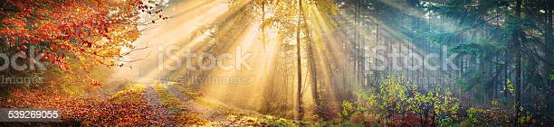 Large 60 Mpix Autumn Forest Panorama Morning Sun Rays Stock Photo - Download Image Now