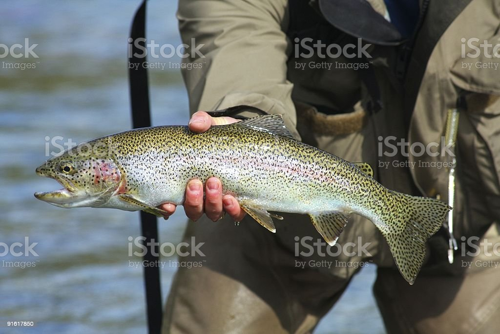 Large Alaskan Rainbow stock photo