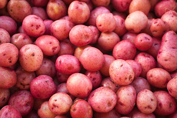A large amount of small red skin potatoes