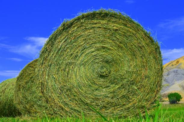 Large bale of hay stock photo