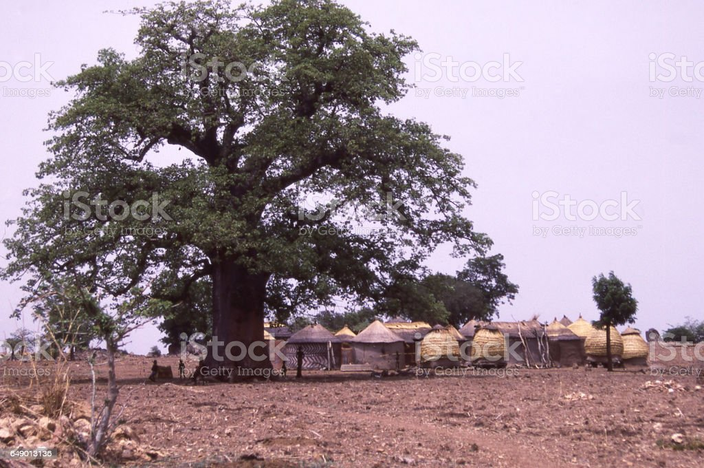 Large Baobab tree and small village compound in northern Ghana Africa stock photo