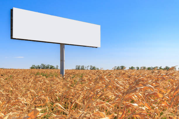 Large billboard stands in the middle of a yellow corn field stock photo