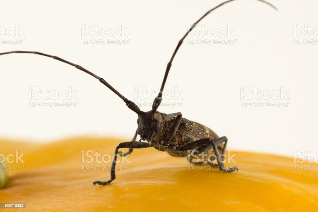 Large black beetle stock photo