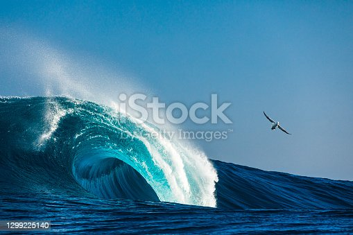 Large blue idyllic wave breaking in the open ocean on a sunny day with Albatros bird flying