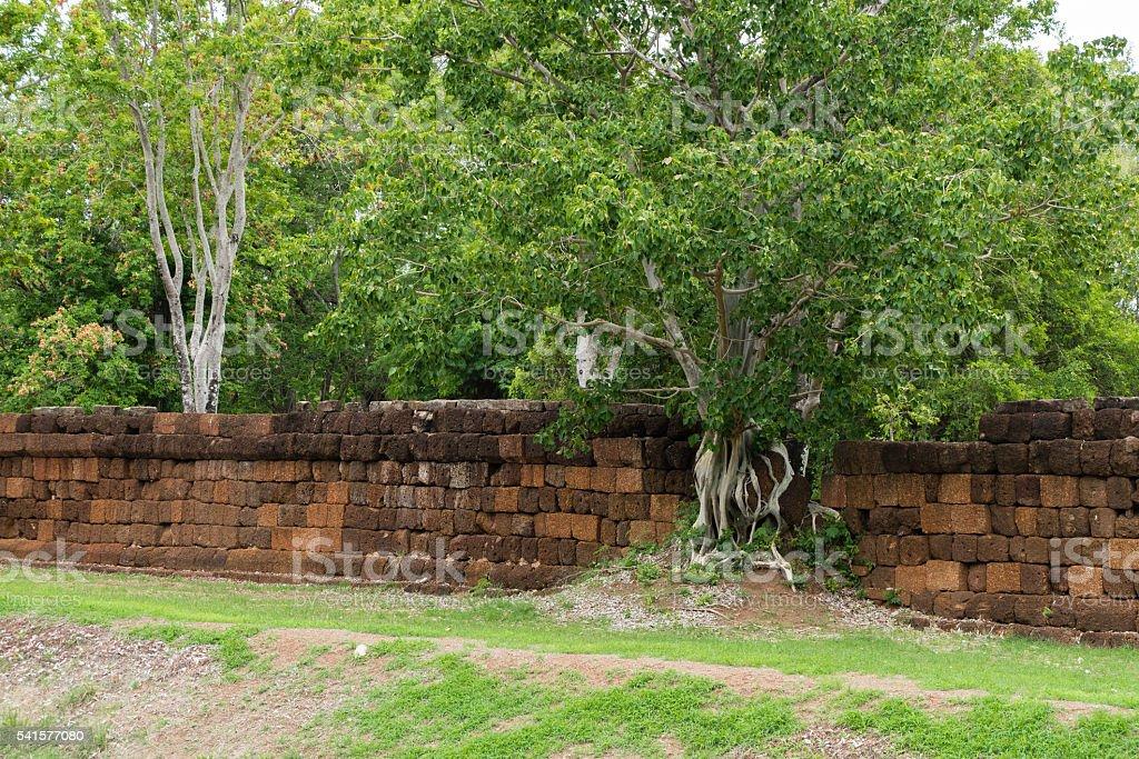 Large Bodhi tree stock photo