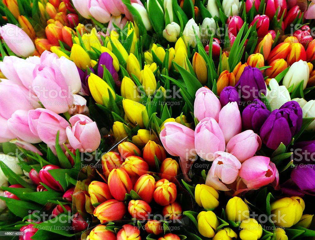 Large bouquet of different colored tulips stock photo