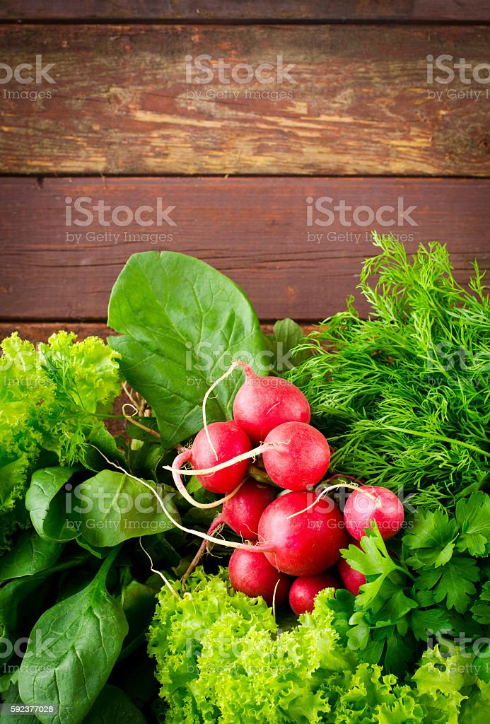 Large bunch of fresh Organic vegetables, radish, spinach, salad and stock photo