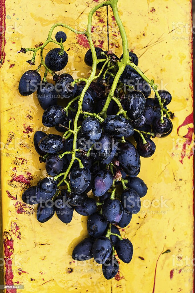 Large bunch of red wine grapes art painted wooden table. royalty-free stock photo
