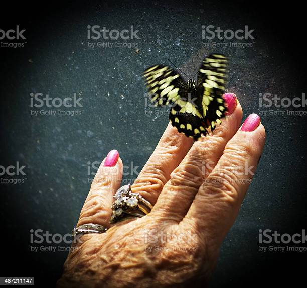 Large butterfly on womans hand picture id467211147?b=1&k=6&m=467211147&s=612x612&h=a qwfie79ehzzh6qzc8mg4jlx adeo173y04u70h6js=