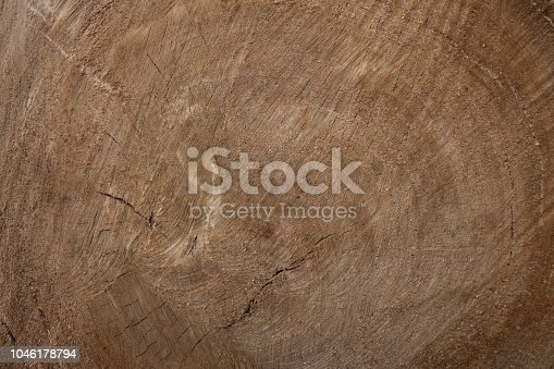 Large circular piece of wood cross section with tree ring texture pattern and cracks. Cross section of the tree. Creative vintage background. Tree poplar