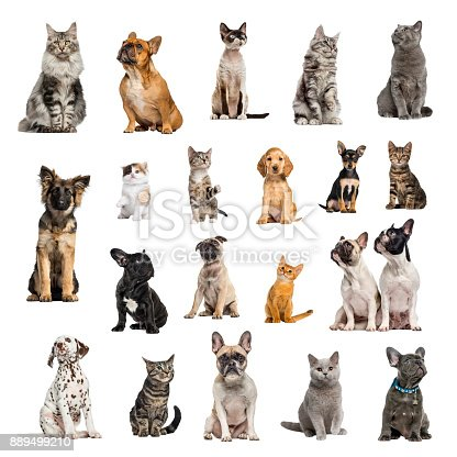 Large collection of 10 dogs and 10 cats, adult, puppy or kitten, in different position, Isolated on white background.