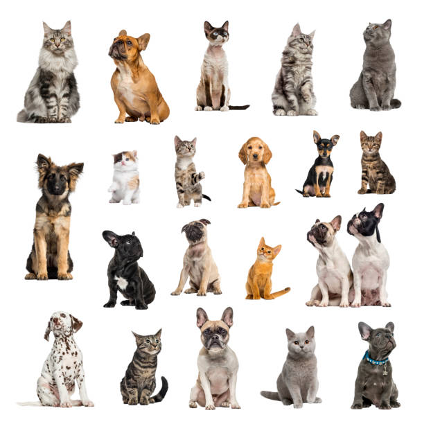 Large collection of 10 dogs and 10 cats in different position stock photo