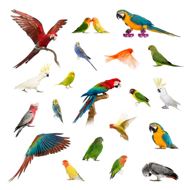 Large collection of bird, pet and exotic, in different position stock photo