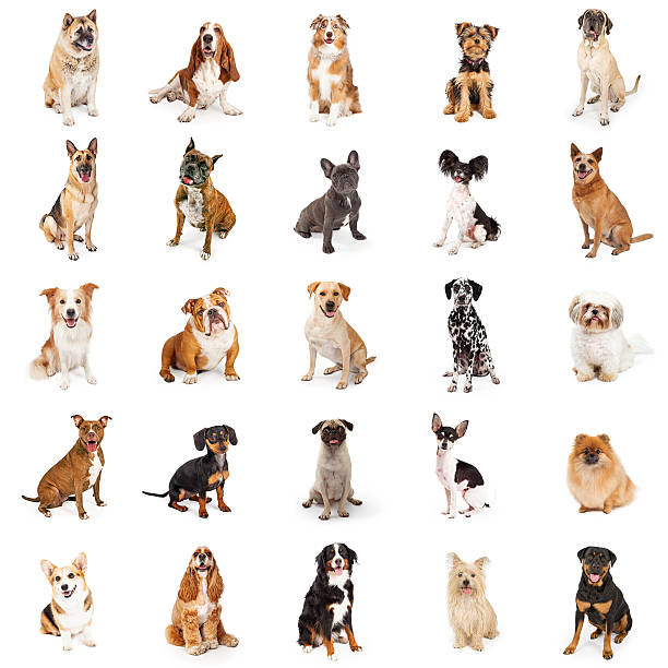 Large collection of common breed dogs picture id537317320?b=1&k=6&m=537317320&s=612x612&w=0&h=ga2nd4c0tun8pqm21 iazg8xamjftkbrp1s07dngi 8=