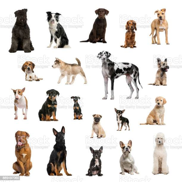 Large collection of dogs in different position picture id889497060?b=1&k=6&m=889497060&s=612x612&h=wvqvksw55jfobucrbk8glapacgnanoeim3yctsj 58e=