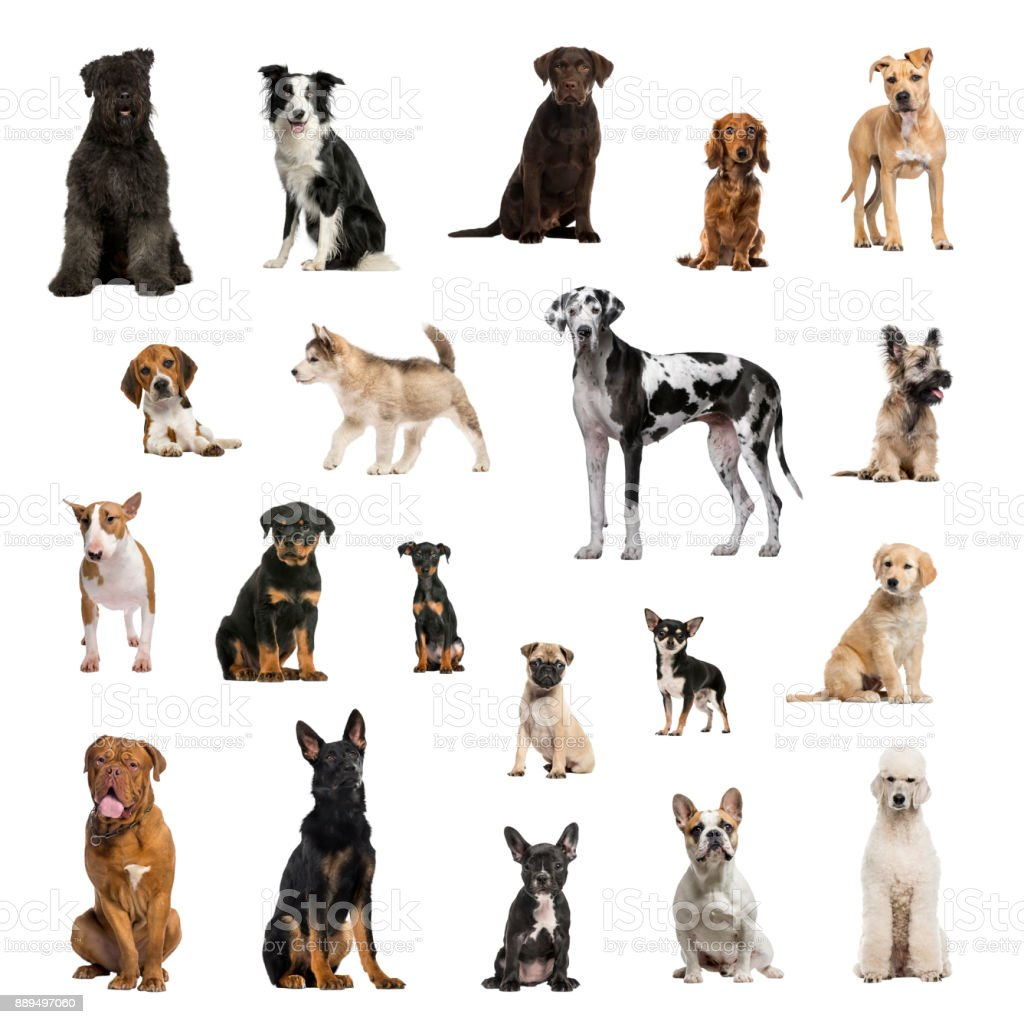 Large collection of dogs, in different position stock photo