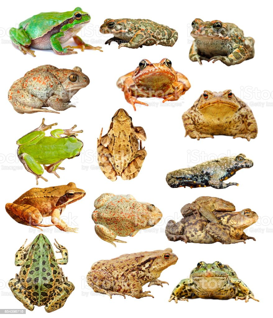 large collection of isolated frogs and toads stock photo