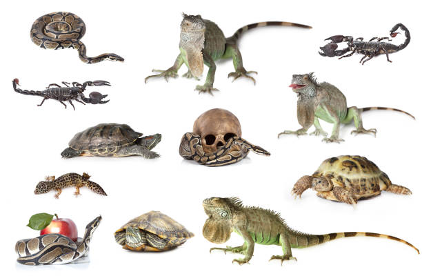 Gran colección de reptiles, mascotas y animales exóticos en diferentes posiciones - foto de stock