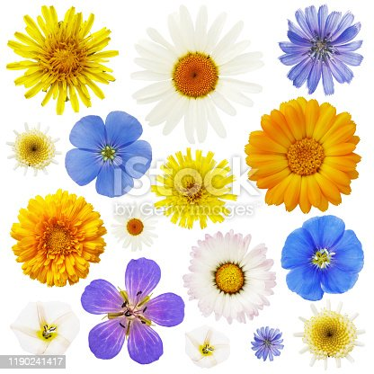 Large collection of wildflowers isolated on a white background. Plants are used in various medications
